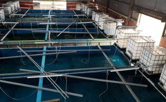 gallery-fishfarm-1