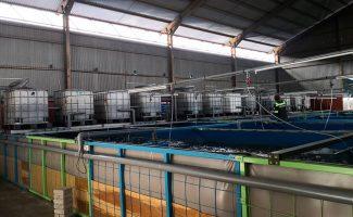 gallery-fishfarm-3